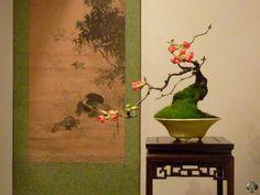 Chaenomeles Japonica by gilthom.