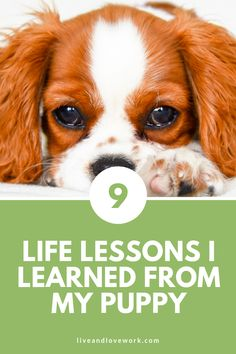 Puppies offer daily lessons in humility, kindness, joy, and laughter. Read on for the major life lessons I learned from my puppy. M Learning, Learning Process, Feeling Scared, Confidence Boost, Work Life Balance, Humility, Snuggles, Business Tips, Life Lessons