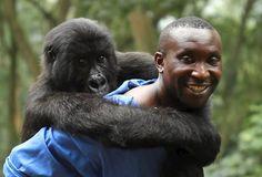 Crítica   Virunga
