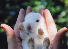 Little baby bunny