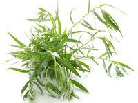 Estragon, proslulá bylinka francouzské kuchyně: recepty a pěstování