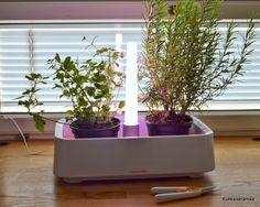 Kukkaiselämää - My flowering life : Yrttipuutarha - HerbGarden