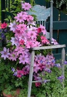 Clematis & old chair......love this look. So simple and pretty.