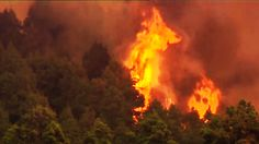 Muere un guarda forestal incendio La Palma
