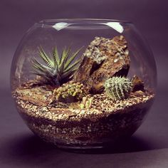 Desert World - Terrarium by bioattic