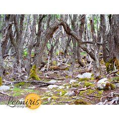 https://flic.kr/s/aHskhsM6zf | Leoniris Fotografía | Galaría de fotos de paisajes y naturaleza