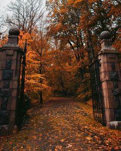 Italy House, November Rain, Autumn Aesthetic, Autumn Cozy, Come And Go, Fall Photos, Fall Season, Fall Halloween, Autumn Leaves