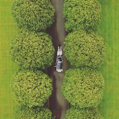 Horse and carriage by drone . Aerial Photography, Wedding Photography, Drones, Wedding Day, Horse, Inspire, Inspiration, Pi Day Wedding, Biblical Inspiration
