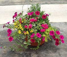 potted flowers garden - Google Search