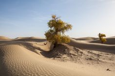 https://flic.kr/p/dw3Y2j | Taklimakan Desert | 塔克拉玛干沙漠