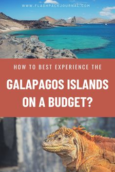 Useful tips and advice for your once in a lifetime trip to the Galapagos Islands on a budget. Get insider travel ideas about how to experience the Galapagos, one of the world's most magical destinations on a shoestring | Traveling the Galapagos Islands | How to travel the Galapagos Islands | Galapagos on a budget | What to do in the Galapagos Islands #galapagostravel #ecuadortravel Galapagos Trip, Galapagos Islands, South America Destinations, South America Travel, All Family, Once In A Lifetime, Travel Themes, Amazing Adventures, Amazing Destinations