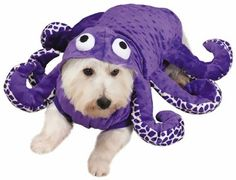 Transform your furry four-legged friend into a mystical and majestic octopus this #Halloween with the Zack & Zoey Large Octo-hound Costume. This intricately designed six-legged octopus costume will be sure to have friends and family chuckling in delight as your canine friend looks like a wide-eyed underwater #dog.
