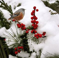 Animated Photo #Birds in nature!