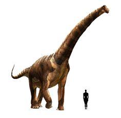 "Prehistoric taxonomy | Futalognkosaurus dukei (""giant chief lizard"")..."