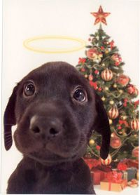 """Christmas brings out the best in us all"" Angel Puppy - Box of 15 Cards at The Animal Rescue Site"