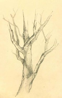 Tree Trunk Drawing, Tree Drawings Pencil, Branch Drawing, Landscape Pencil Drawings, Drawing Trees, Drawings Of Trees, Tree Pencil Sketch, Pencil Drawings Of Nature, Paintings Of Trees