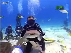 Kissing a shark