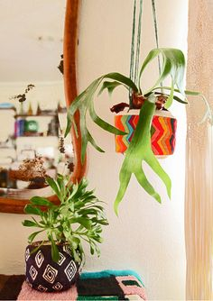 etsy:    Awesome:Plant-a-colada: easy DIY planters from coconuts!   Justina Blakeney.