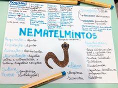 Bom dia galerinha!! Os Nematelmintos hoje! #nematelmintos #nematodeos #filos #biologia sigam: @papodeestudante_
