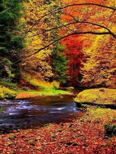 Autumn landscape, colorful leaves on trees, morning at river. Vinyl Wall Mural - Seasons Autumn landscape, colorful leaves on trees, morning at river. Wall Mural ✓ Easy Installation ✓ 365 Days to Return ✓ Browse other patterns from this collection! Fall Pictures, Pretty Pictures, Fall Leaves Pictures, Fall Photos, Colorful Pictures, Fall Images, Colorful Trees, Amazing Pictures, Beautiful World