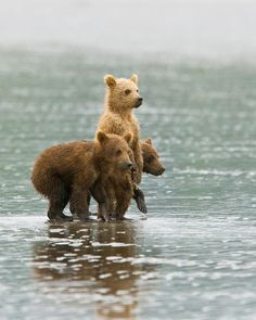 three little bears.  adorable! Playing in the water and the rain.