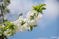 Varaslähtö kevääseen Madridin puistoissa | Unelmatrippi