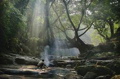 Living root bridge at Mawlynnong, Meghalaya © Axiom Photographic / Getty Images