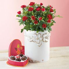 Valentine's Day Mini Roses - Yum. Flowers and chocolate. You can't go wrong with those.