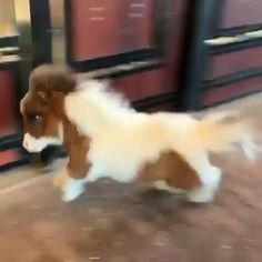 WAIT for the MOONWALK 💃😂 Funny Horse Videos, Funny Animal Videos, Funny Animal Pictures, Animal Memes, Funny Horse Pictures, Animal Humor, Cute Little Animals, Cute Funny Animals, Cute Dogs