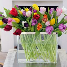 It's time for tulips!