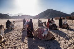 I really love to travel and meet different people in other countries, like this beduines in the desert of Egypt.    More here: http://www.phothomas.de/fotos-aus-aegypten-2015/    Follow me on Instagram: https://www.instagram.com/phothomas.de/    #aegypten #egypt #desert #wueste #beduines #camel #muslim #burka #travel #vacation #holiday #urlaub #trip #photography #canon #canoneos5dmark3 #phothomas #photographer #oldenburg #rastede #bremen #fotograf #thomasweber #germany #photooftheday