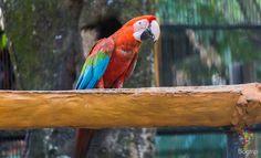 Guacamayas, aves de Colombia https://blogtrip.org/parque-tayrona-santa-marta-colombia-viaje-natural/