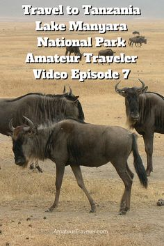 Travel to Tanzania – Lake Manyara National Park – Amateur Traveler Video Episode 7