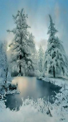White winter paradise.                                                                                                                                                                                 More