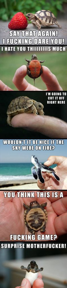 Adorable Tiny Turtles  // funny pictures - funny photos - funny images - funny pics - funny quotes - #lol #humor #funnypictures