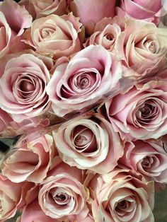 'Pink' Avalanche Rose...Sold in bunches of 20 stems from the Flowermonger the wholesale floral home delivery service.