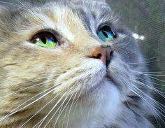 7 Zeichen, wenn deine Katze glücklich ist.