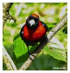 aves de costa rica fotos - Buscar con Google