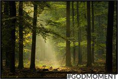 Bos: ons land kent mooie plekjes, met veel natuur en groen. Haal even een frisse neus en maak er gewoon een #Godmoment van!