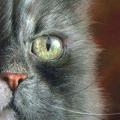 I see by irishishka