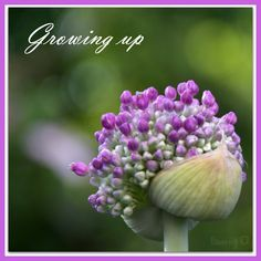 LÖwin.g: Allium 2 ...