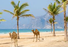 Que faire à Oman : 10 raisons de visiter la cité des 1001 nuits