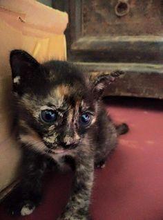 A Meow Mumbai member snapped up an Indian hippie's kitten living in Goa #meowmumbai