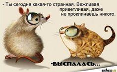 Самые смешные картинки про кошек - прикольные открытки
