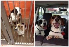 The difference between a dog in a kennel and a dog rehomed as you can tell can be quite amazing!!