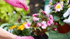 Makeover your garden for less this summer with these 15 top money saving gardening tips. Save money and time this summer! Money Saving Tips, Gardening Tips, Save Yourself, Plants, Beauty, Fashion, Earn Money Online, Growing Weed, Exotic Plants