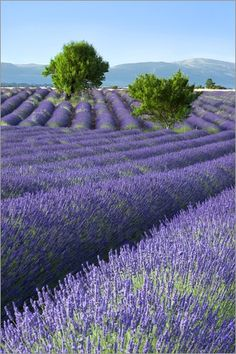 Aix-en-Provence                                                                                                                                                                                 Mehr
