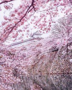 Японія очима мандрівника: вражаючі фото - 162011