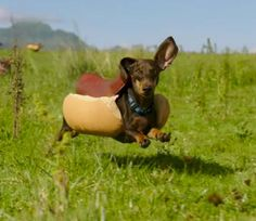 Heinz Made a Hilarious Super Bowl Ad That's Basically a Horde of Weiner Dogs in Costumes
