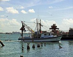 Shrimp Boat pulling into port